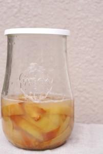 りんご酵母